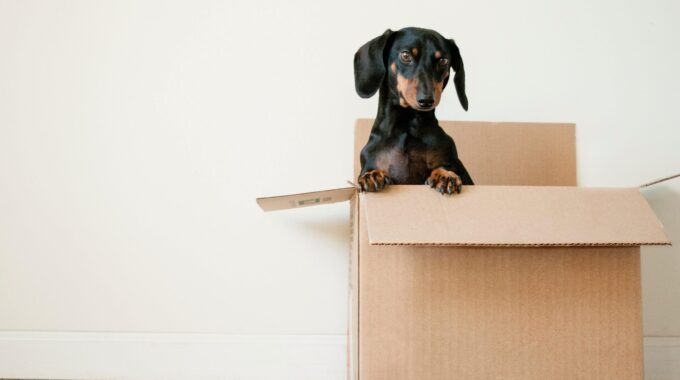 How To Prepare For Your Next House Move